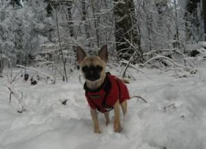 Carolyn Roper's dog Lois